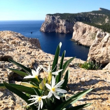 Flora di Capo Caccia